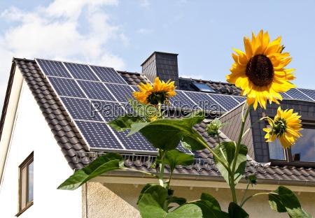 celulas solares no telhado atras girassol