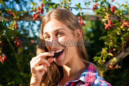 woman while picking berries in the