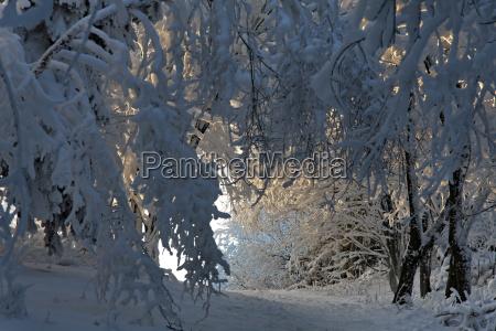 winter ice winter landscape path way