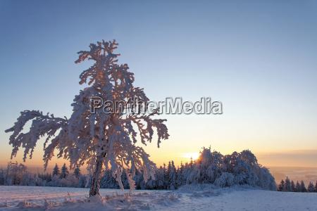winter sunset winter landscape path way
