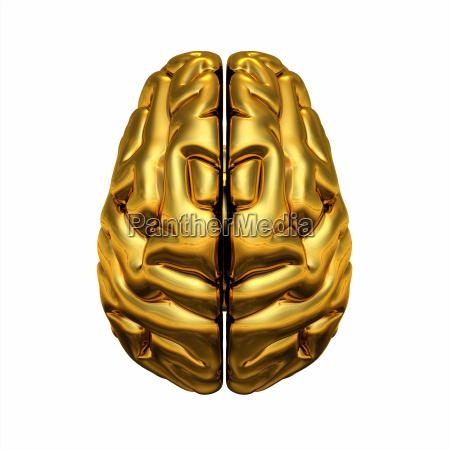 opiniao do cerebro parte superior do