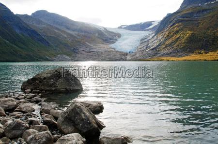 arvore arvores caucasiano rocha noruega gelo