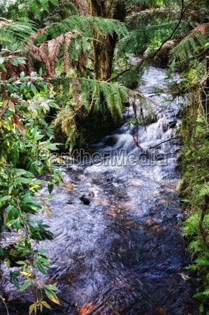 rain forest stream