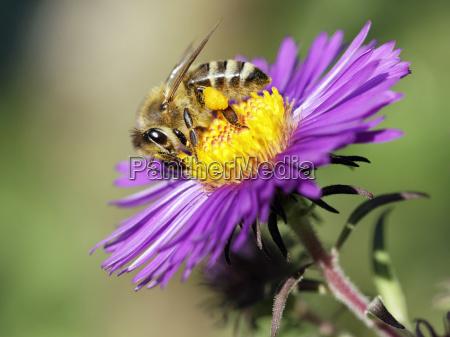 inseto flor planta primavera polen nectar