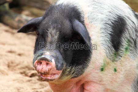 banco animal mamifero agricultura irrelevante minusculo