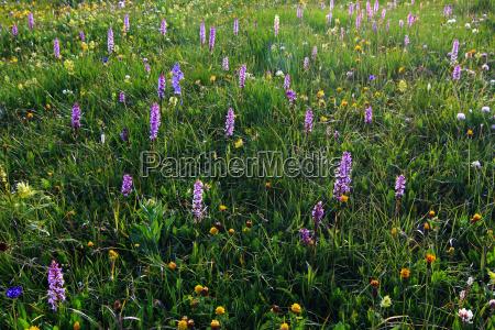 verao flores prado flor prado de