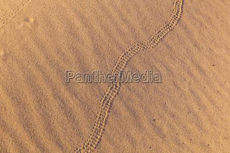 marca de cobra na duna