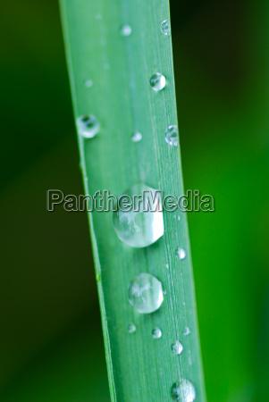 talo gotas de agua agua prado