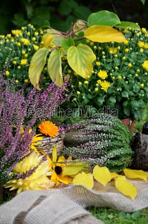 horta outono