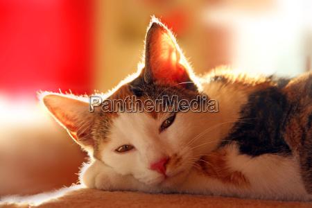 cuddle cat tranqueilidade tres cores resto