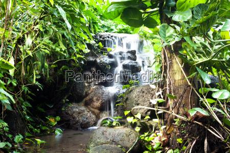 cachoeira na floresta humida