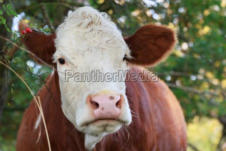 close up animal mamifero marrom retrato