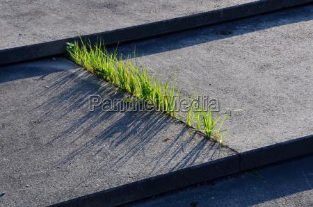 grama e concreto