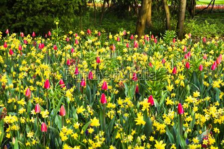 tulipas jacintos primavera abrotea sazonal flores