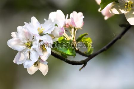 flor planta primavera luz do sol