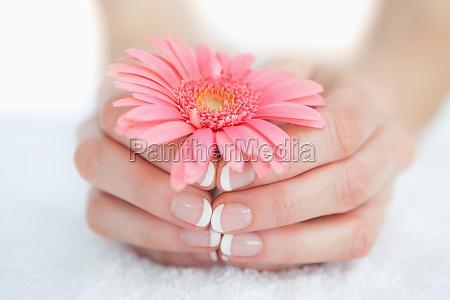 maos manicures francesas segurando flor