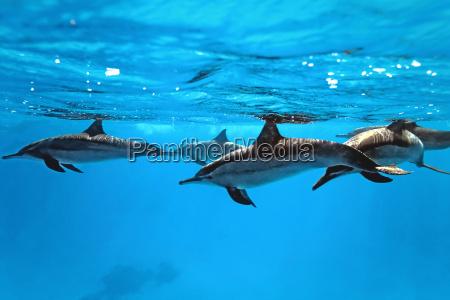 golfinhos no mar