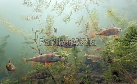 peixe subaquatico animais selvagens agua doce