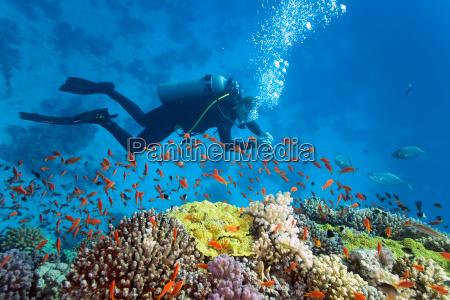 peixe subaquatico animais selvagens recife mergulhador