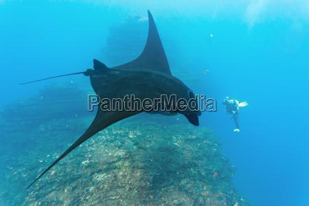 animal peixe subaquatico raio de luz