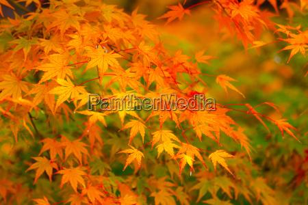 arvore folhas dourado ramo bordo amarelo