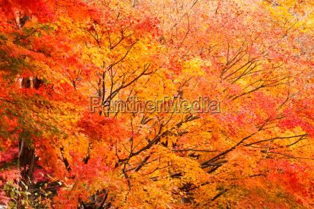 folha detalhe ambiente selva dourado ramo