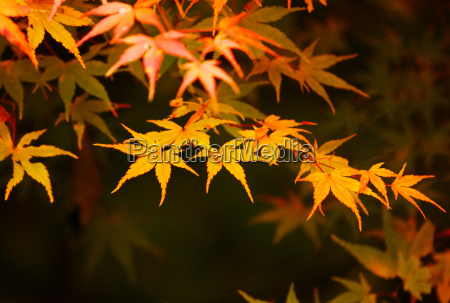 folha detalhe ambiente dourado ramo ao