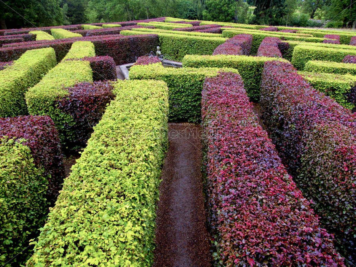 edgerow, jardim, labirinto, verde, e, vermelho - 10003384