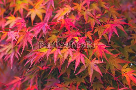 folha detalhe ambiente cor selva dourado