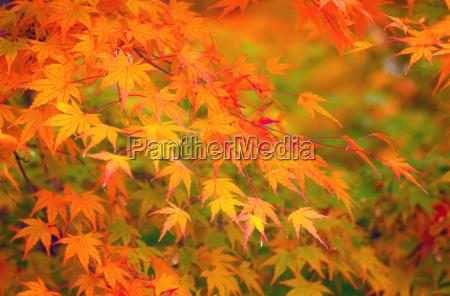 amarelo e vermelho deixa no outono