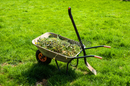 wheelbarrow no gramado