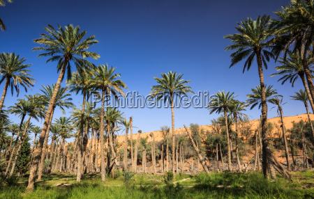 oasis no meio de um deserto