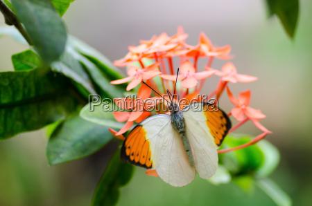 inseto flor planta borboleta primavera pano