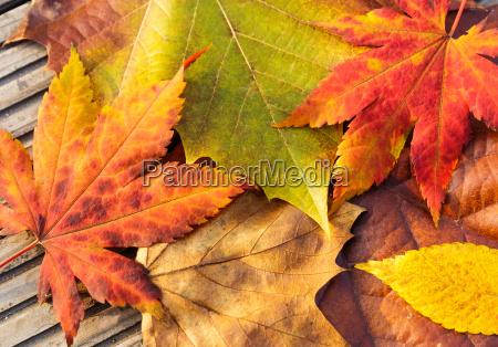 fechar folha madeira marrom dourado bordo