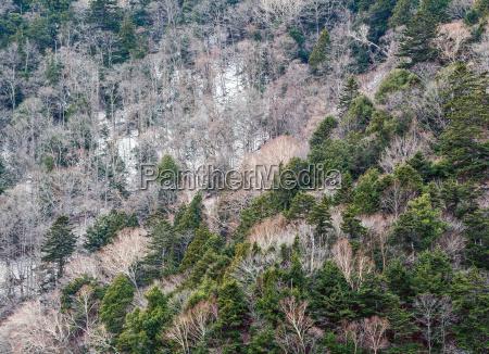 folha ambiente arvore inverno madeira tronco