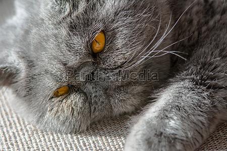 animal de estimacao face retrato olhos