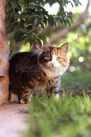 gato de casa colorido