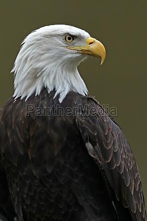 animal passaro passaros aguia