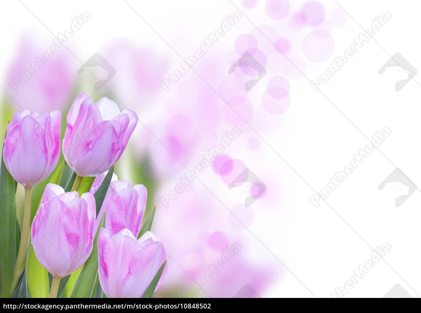 stockphoto 10848502 fundo flor rosa