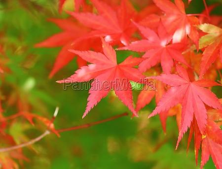 fechar belo agradavel folha close up