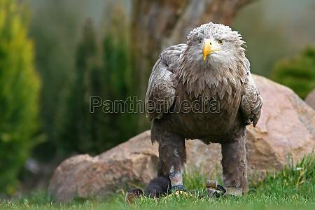 animal passaro animais passaros aguia