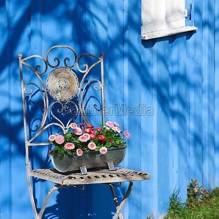cadeira de jardim com margarida
