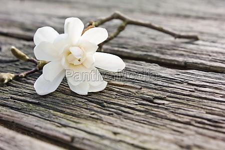 board wood brown brownish brunette bloom