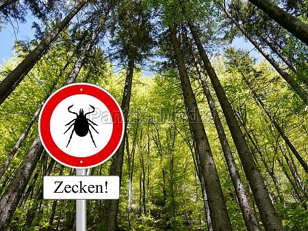 carrapato sinal na floresta