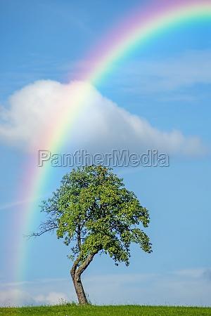 arvore com arco iris