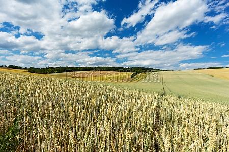 paisagem da agricultura