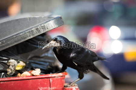 cidade passaro recipiente corvo para recipientes