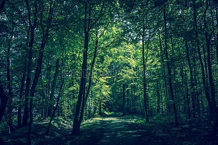 belo agradavel folha ambiente arvore parque