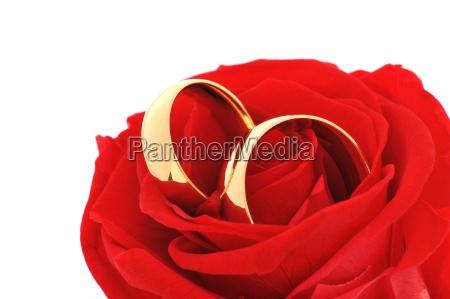 dois aneis com rosa
