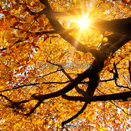 sun shines through trees in autumn